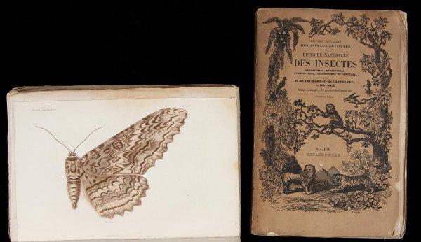 2023: Histoire Naturelle des Insectes 1850