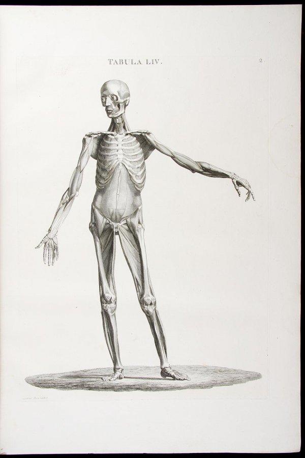 2033: Caldani's anatomical atlas w/461 plates 1801-14
