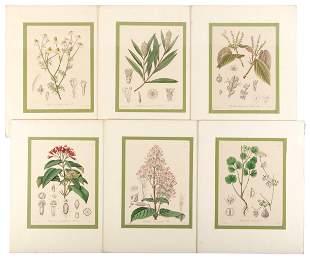 Twenty hand-colored botanical lithos by F.G. Kohl