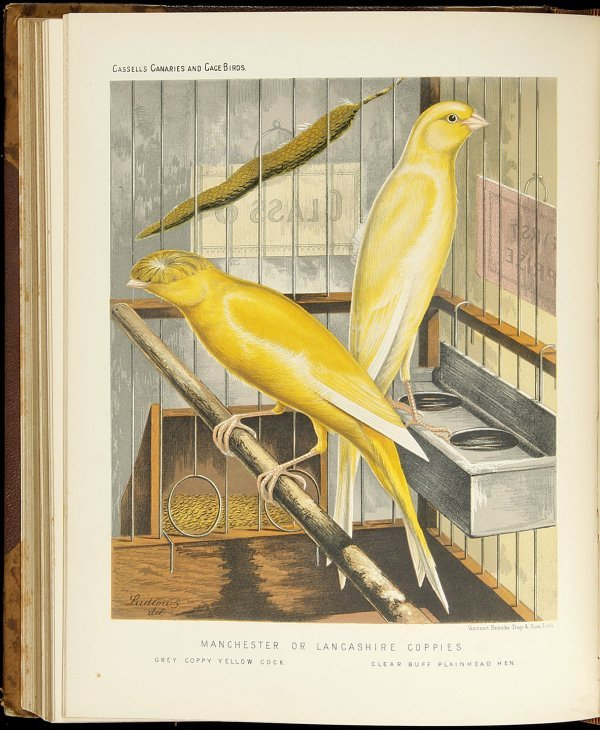 17: The Illustrated Book of Canaries and Cage-Birds