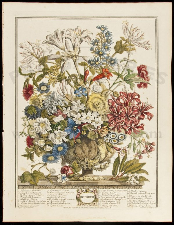 398: Furber's Flowers 1730 12 hand-colored plates