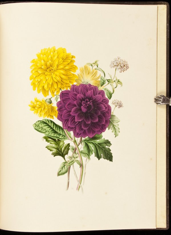 20: Flora's Gems 12 hand-colored plates