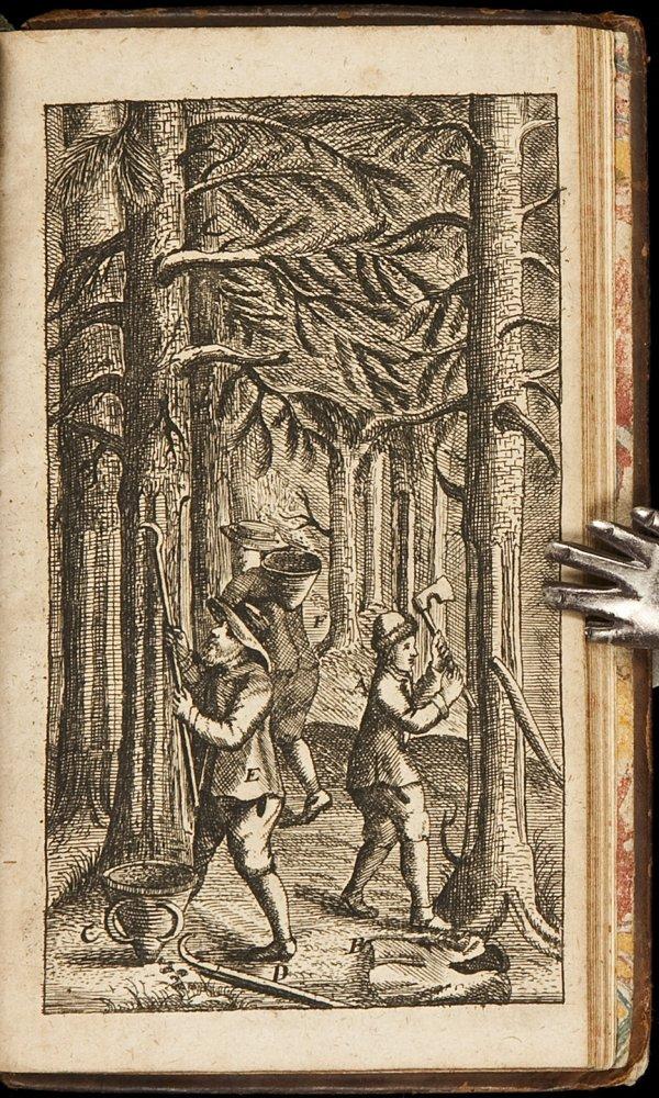 21: Rare work on Coniferous trees 1679