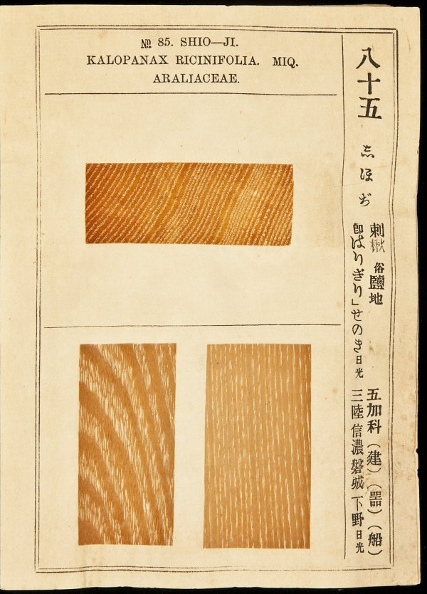 41: Illustrated View of Useful Lumber, Book 1