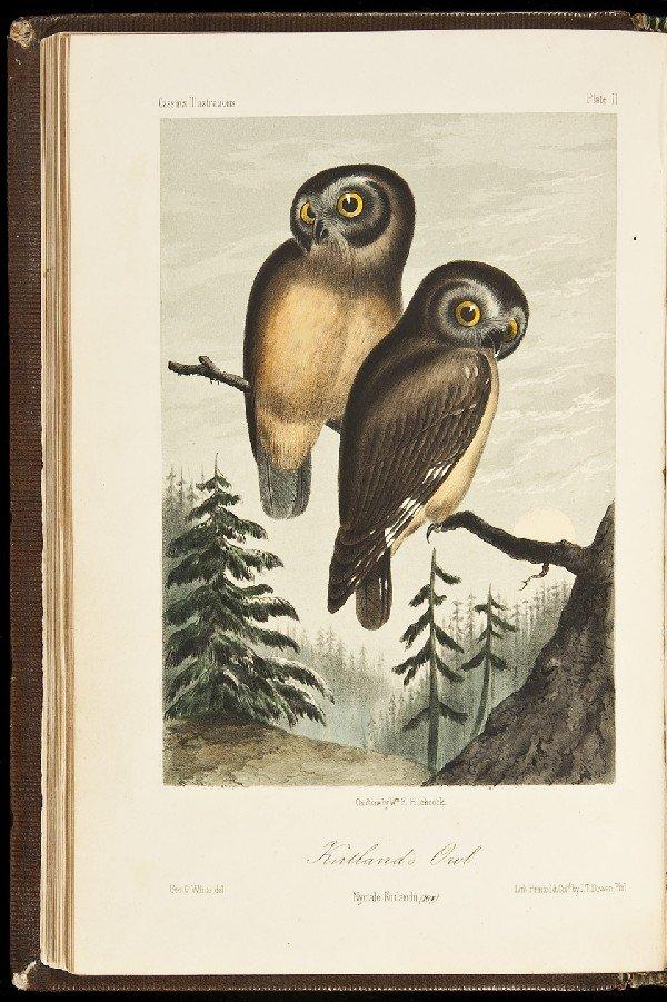 72: Cassin's Birds of California, etc. Color plates