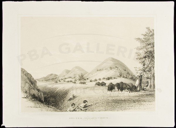 74: Buffalo Hunt, Approaching a Ravine Catlin litho