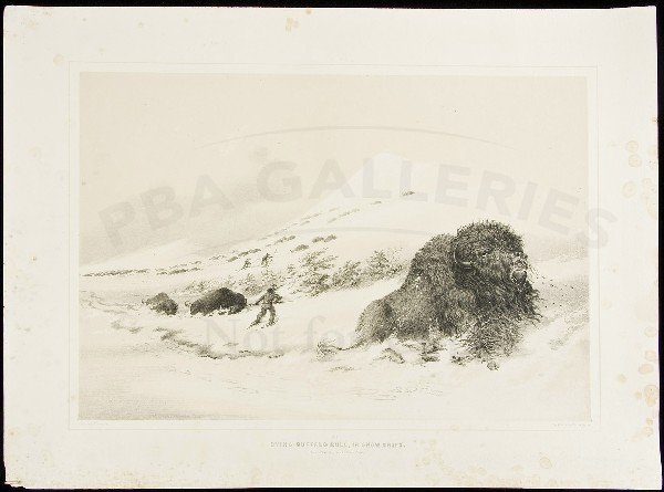 78: George Catlin lithograph of dying buffalo in snow