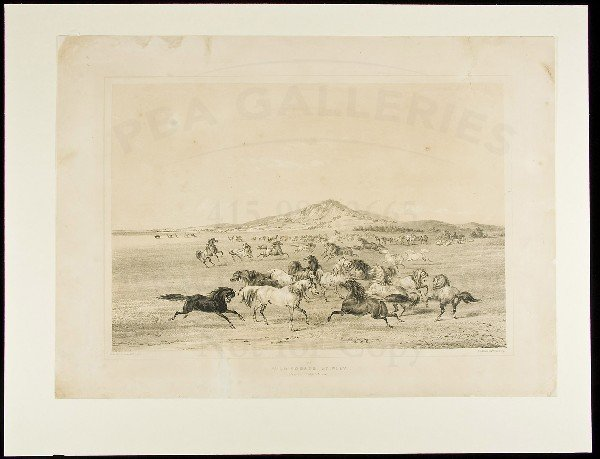 79: Wild Horses, At Play lithograph by George Catlin
