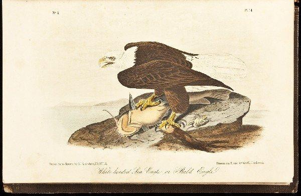 7: Volume 1 of Audubon's Birds 1856 Octavo Edn.
