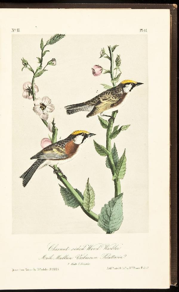 8: Volume 2 of Audubon's Birds 1856 Octavo Edn.