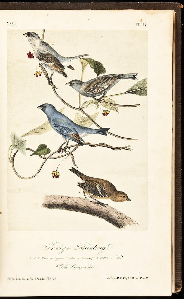 9: Volume 3 of Audubon's Birds 1857 Octavo Edn.