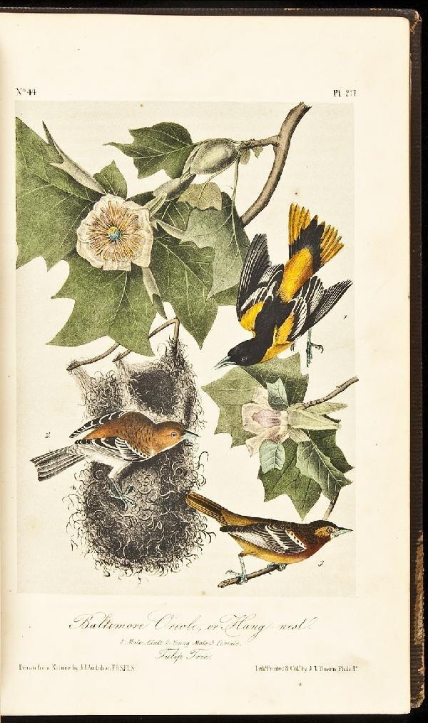 10: Volume 4 of Audubon's Birds 1856 Octavo Edn.