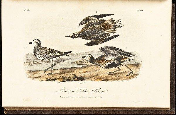 11: Volume 5 of Audubon's Birds 1856 Octavo Edn.