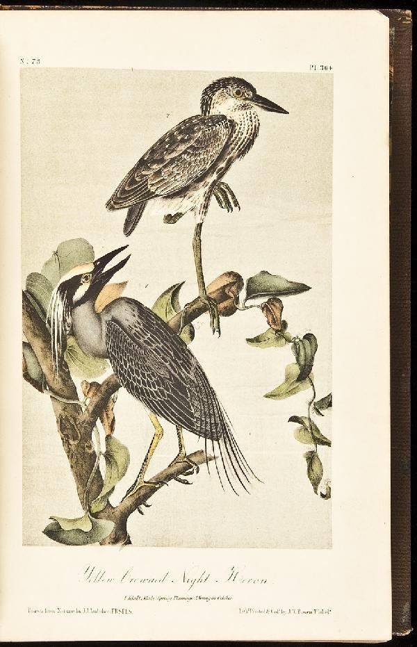12: Volume 6 of Audubon's Birds 1856 Octavo Edn.