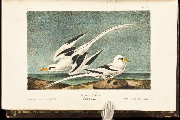 13: Volume 7 of Audubon's Birds 1856 Octavo Edn.