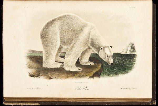 15: Volume 2 of Audubon's Quadrupeds 1854 Octavo Edn.