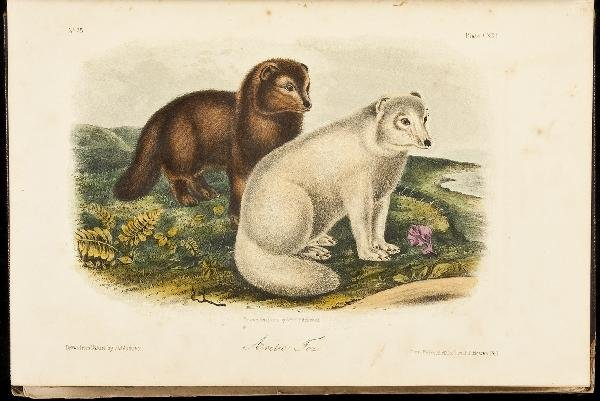 16: Volume 3 of Audubon's Quadrupeds 1854 Octavo Edn.