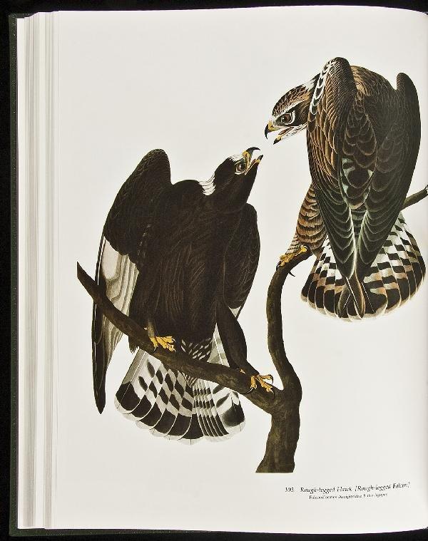 17: Audubon's Birds of America 1981 Easton Press