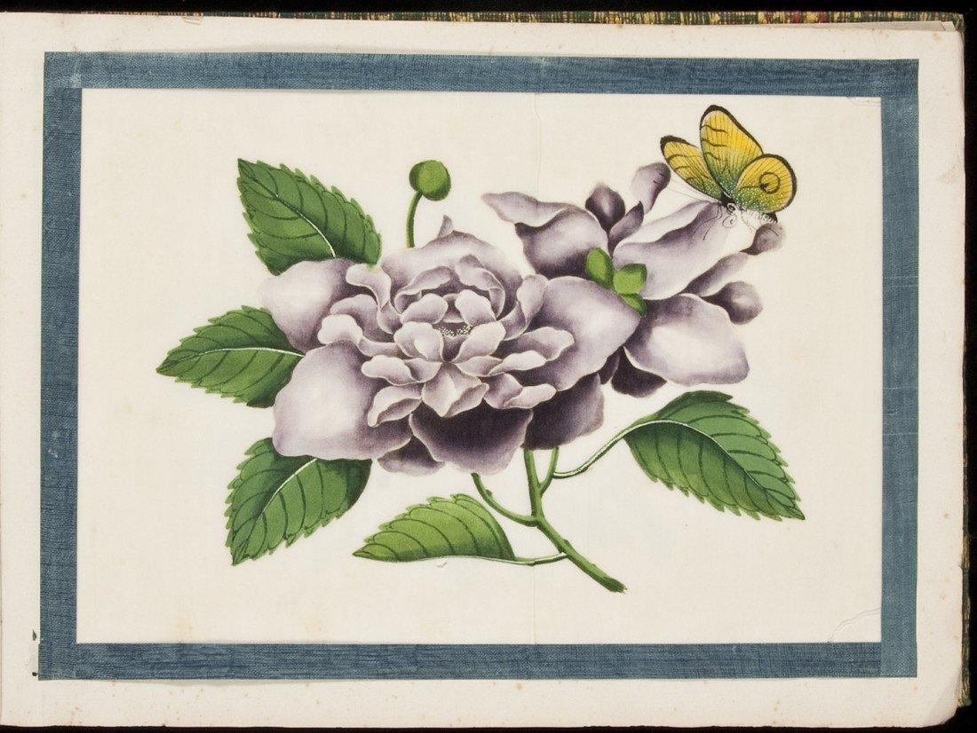 14: Album of 12 watercolor botanical paintings