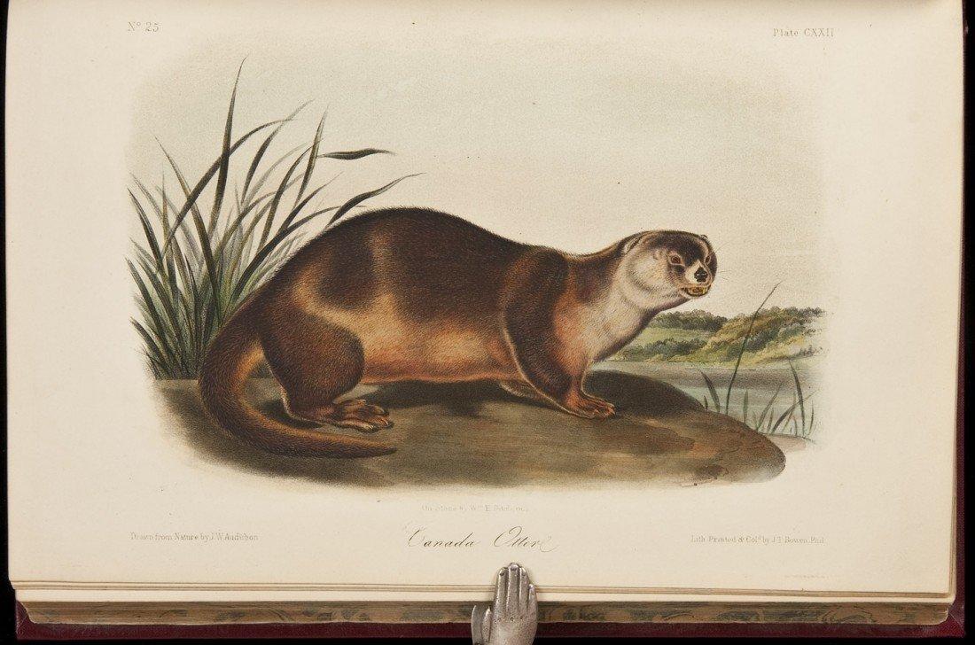 18: Volume 3 of Audubon's Quadrupeds 1854 Octavo Edn.