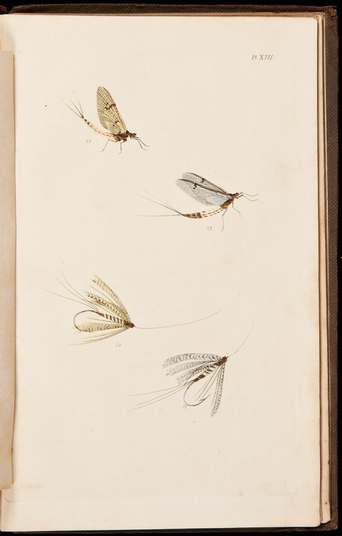 2: The Fly-Fisher's Entomology by Ronalds 1836