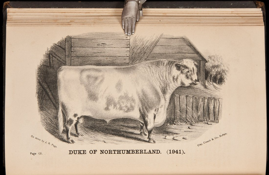 16: History of the Short-Horn Cattle 1872