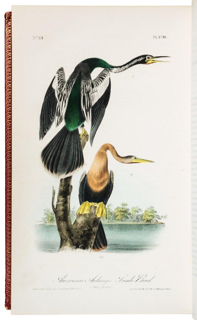 Volume 6 of Audubon's Birds 1843 1st Octavo Edn.