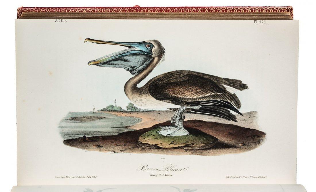 Volume 7 of Audubon's Birds 1844 1st Octavo Edn.