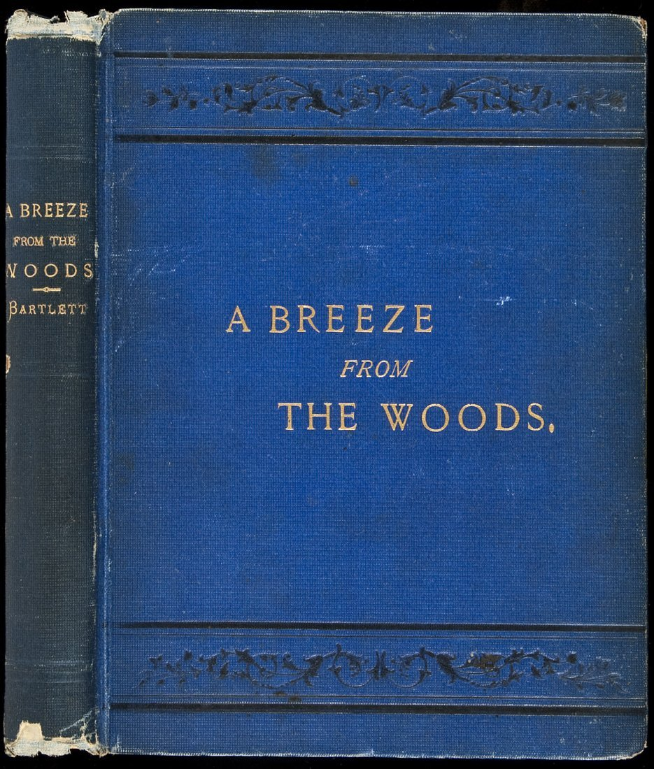 A Breeze from the Woods