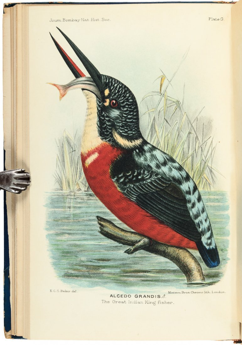 Birds of Cachar 9 color plates