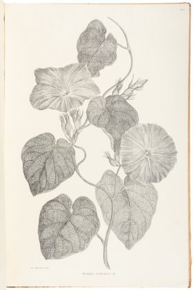 Australian Botany From Cook's First Voyage