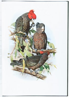 Australian Parrots By Forshaw And Cooper
