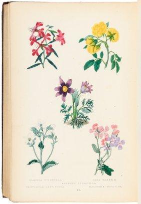 Maund's Botanic Garden Second Edition
