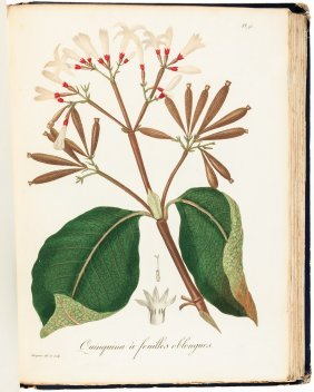 Color Plates Of Medicinal And Poisonous Plants 1821