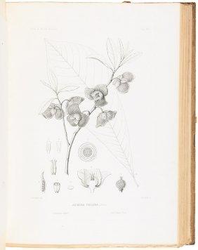 Sargent's North American Silva 14 Volumes