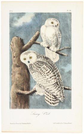 Plates From Audubon's Birds Of America
