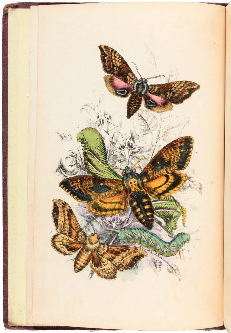 British Butterflies and British Moths