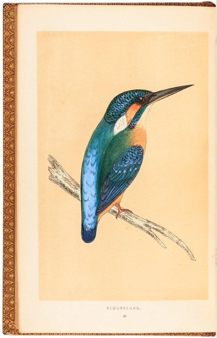 Gilbert's Natural History of Selborne Extra-illustrated