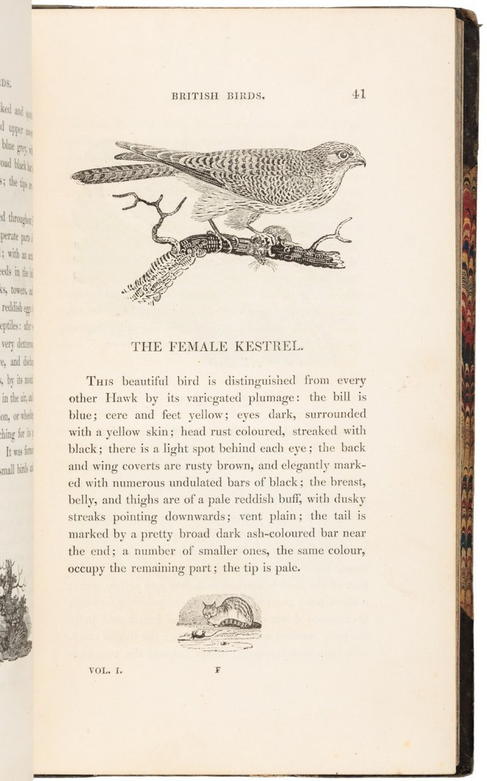 Bewick's British Birds - 2