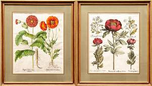 Pair of Hand Colored Engraving by Besler