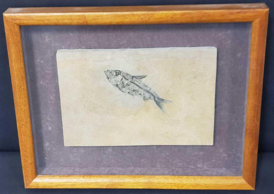 Fish fossil specimen from Ulrich's Fossil Gallery