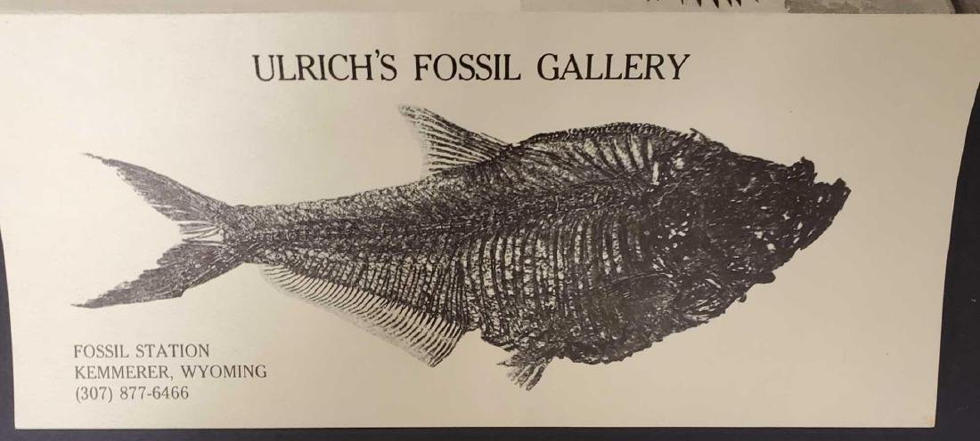 Fish fossil specimen from Ulrich's Fossil Gallery - 3