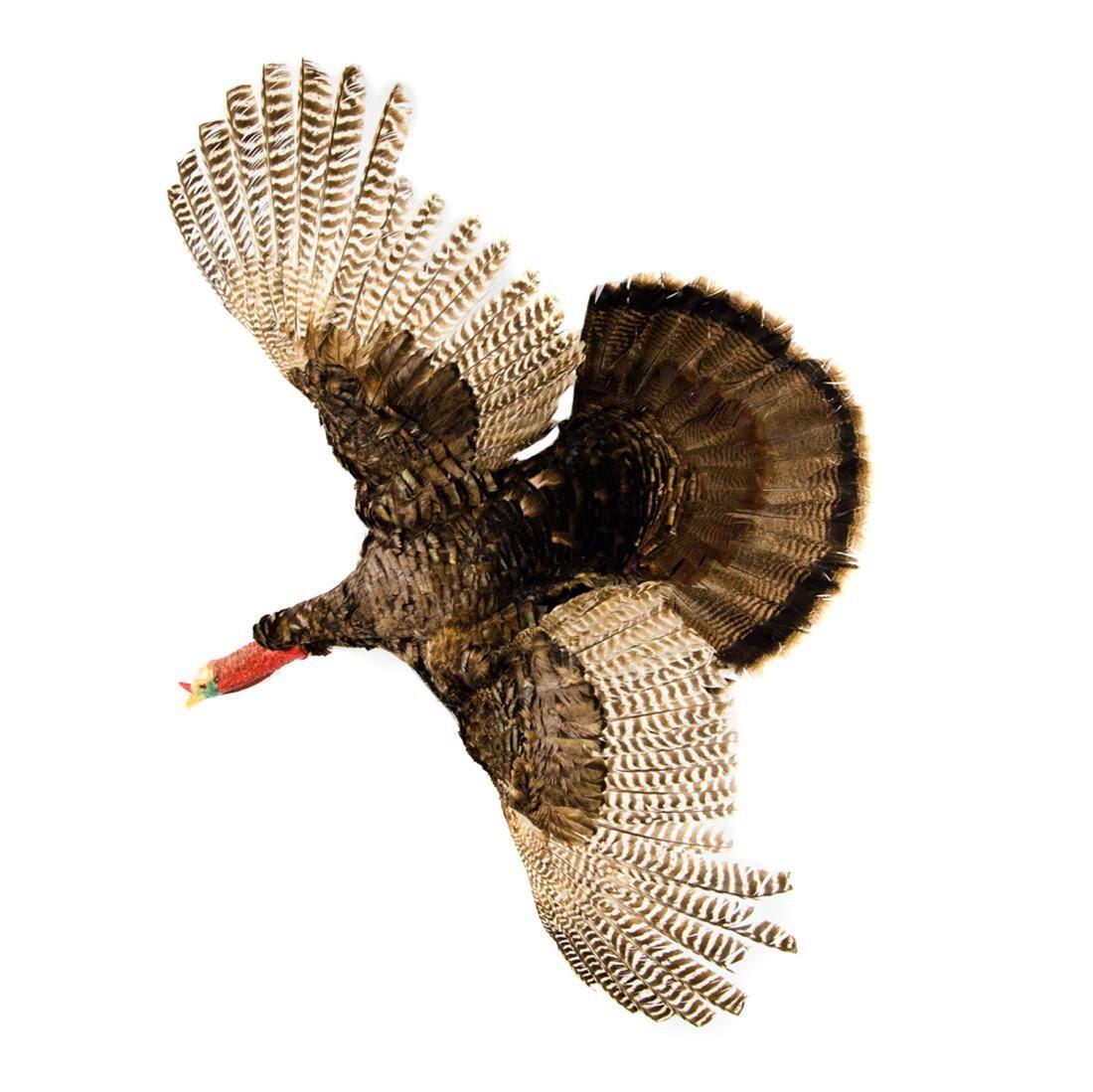 Eastern Wild Turkey Life-Size Taxidermy Mount