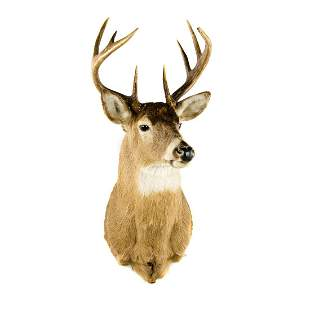 Ten-Point Whitetail Deer Head Taxidermy Mount