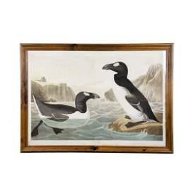 """1860 Audubon Bien Edition """"Great Auk"""" Chromolithograph"""