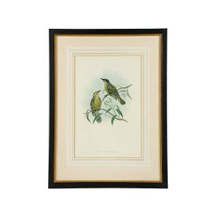 19th C. Hand-Colored Zoological Lithograph by J. Gould