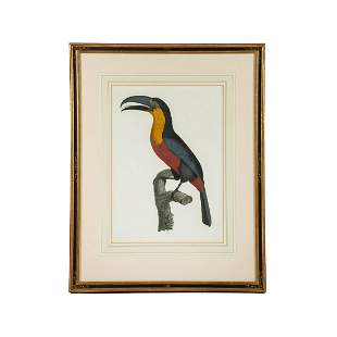 19th C. Hand-Colored Zoological Toucan Lithograph