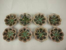 Etruscan Majolica shell & seaweed set of 8 scalloped