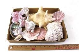 Lot of Shells or Seashells