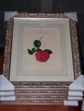 FOUR AQUATINTS OF CAMELIA' S BY BERLESE H: 16, W